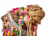 Decorated Camel Head Isolated On White Background
