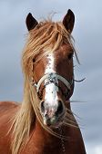 Beautiful Horse Close Up