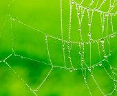 Dewdrops On A Spider Web
