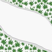 picture of marijuana leaf  - Marijuana Leaves Dot Torn Background with center for copy - JPG