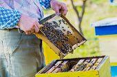 stock photo of bee-hive  - Beekeeper checking hive. Beekeeper checking hive. Bee ** Note: Shallow depth of field - JPG