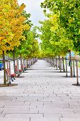 pic of tree lined street  - Tree lined pedestrian sidewalk with colorful autumn foliage - JPG