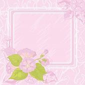 picture of ipomoea  - Foral background with frame and flowers Ipomoea - JPG
