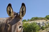 stock photo of headstrong  - Donkey in a Field in sunny day near the village - JPG