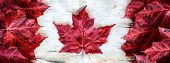 stock photo of canada maple leaf  - A Canada flag made from real red maple leafs on a birch bark background - JPG