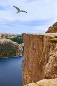 picture of fjord  - Cliff Preikestolen in fjord Lysefjord  - JPG