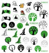 picture of hazelnut tree  - icons on the topic of forest  - JPG