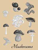 stock photo of champignons  - Mushrooms placard depicting champignon - JPG