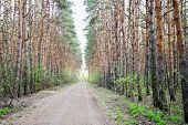 foto of asheville  - an image of road in a pine forest - JPG