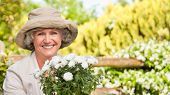 stock photo of old lady  - Smiling woman in her garden - JPG