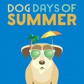 Dog Days Of Summer Time For Adventure. Cute Comic Cartoon. Colorful Humor Retro Style. Canine In Sun poster