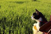 Black Cat Outdoor. Cat Over Grass Background. Cat Looking To The Side, Cropped Shot.summer Nature Ba poster