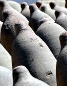 stock photo of ica  - Row of Clay Wine Fermenation Storage Tanks for wine making in Ica Winery Peru  - JPG