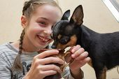 Pretty Smiling Girl. Her Chihuahua Dog Poses Near. Girl And Chihuahua At The Table. Girl 9 Years Old poster