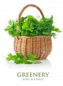 fresh spicy herb in basket isolated on white background poster