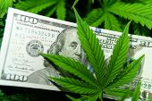 Revenues In The Marijuana Industry And The Medical Industry. American Dollar Bill On Cannabis Leaves poster