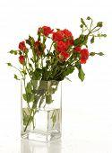 Постер, плакат: Букет из красных роз в прозрачной ваза на белом фоне