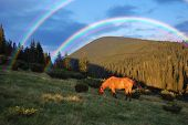 Horse grazing in the mountains and a beautiful rainbow