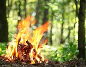 stock photo of ash-tree  - Bonfire in the forest - JPG