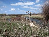 image of beartooth  - Photograph of Cattail swamp in Montana with Absaroka - JPG