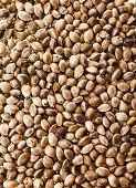 stock photo of seed bearing  - Cannabis Hemp seeds close up macro shot surface top view background - JPG