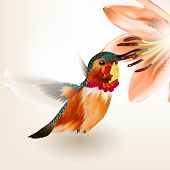 image of day-lilies  - Vector illustration with realistic humming bird for design - JPG