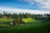 stock photo of rich soil  - A view of the terraced rice fields on the rich fertile valley of volcano soil hills of Bali - JPG