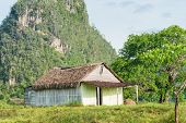 pic of tobacco barn  - Rural scene with a rustic house known as bohio at the Vinales Valley in Cuba - JPG