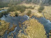 pic of swamps  - Aerial photography - JPG