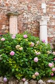 foto of vicenza  - Two of the Roman style columns in the external courtyard of the olimpic theatre in Vicenza - JPG
