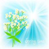 pic of small-flower  - Vector card with small white flowers on shining sky blue background - JPG