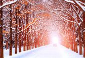 picture of tree lined street  - Two people are on the long avenue of trees along the winter - JPG