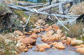 stock photo of south-western  - Water stream with logs near Sir Lowrys Pass in the Western Cape Province of South Africa - JPG