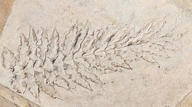 foto of paleozoic  - large print beautiful long leaf plants with veins in solid rock - JPG
