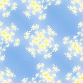 picture of mandelbrot  - Fractal floral white pattern on blue background - JPG