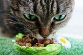 picture of tabby cat  - A portrait of a beautiful green eyed tabby cat with cat food.