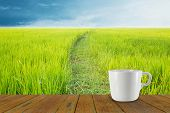 pic of coffee coffee plant  - Blur coffee cup and natural background - JPG
