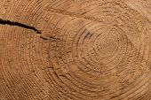 picture of crevasse  - A flat shot of the texture and grain in a cut stump of a tree with a crack splitting it open from the side - JPG