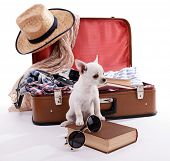 picture of dog clothes  - Adorable chihuahua dog and suitcase with clothing isolated on white - JPG