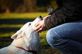 picture of husky  - The love between young man and his white siberian husky - JPG