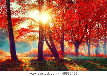 Autumn. Fall scene. Beautiful Autumnal park. Beauty nature scene. Autumn landscape, Trees and Leaves picture