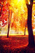 Autumn. Fall scene. Beautiful Autumnal park. Beauty nature scene. Autumn landscape, Trees and Leaves poster