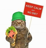 The Cat In A Green Cap Holds A Funny Sign  Keep Calm And No Diet  And A Smoked Salmon With Bubble  poster