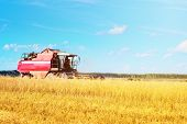 Combine Harvester Agriculture Machine Harvesting Golden Ripe Wheat In Farm Field poster