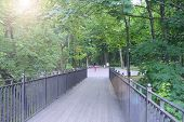 Wooden Bridge In City Park. People Walking On Path With Green Trees. Bridge In Park With Big Trees A poster