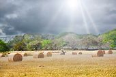 Agricultural Field With Hay Bales Under A Gray Sky With Sunrays Shining poster