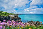 Pink Sea Thrift Flowers On The Stunningly Beautiful Coast In St. Ives, Cornwall, England, Uk poster