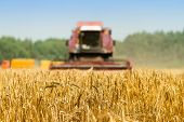 Selective Focus On Golden Ripe Wheat. On The Foreground Agriculture Machine Harvesting Field. Agricu poster