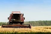 Agriculture Machine Harvesting Golden Ripe Wheat In Field For Grain Export. Agriculture And Farming  poster