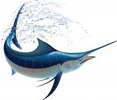 pic of blue animal  - Blue marlin swinging in water sprays - JPG
